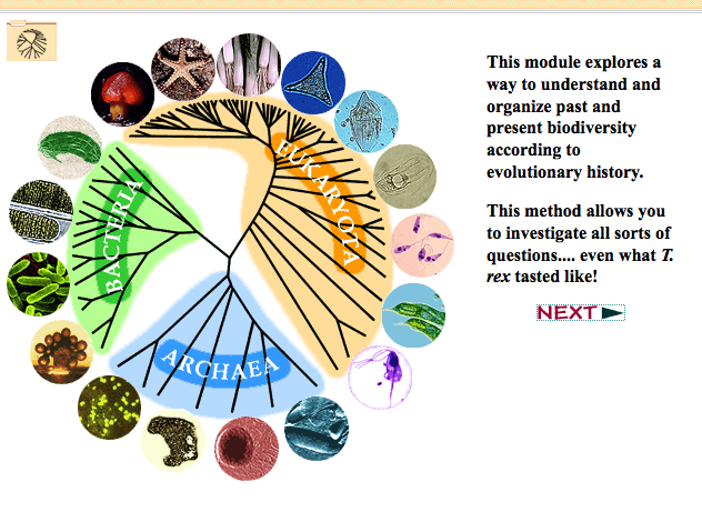 Evolution Phylogenetic Trees And Younger Audiences Smithsonian