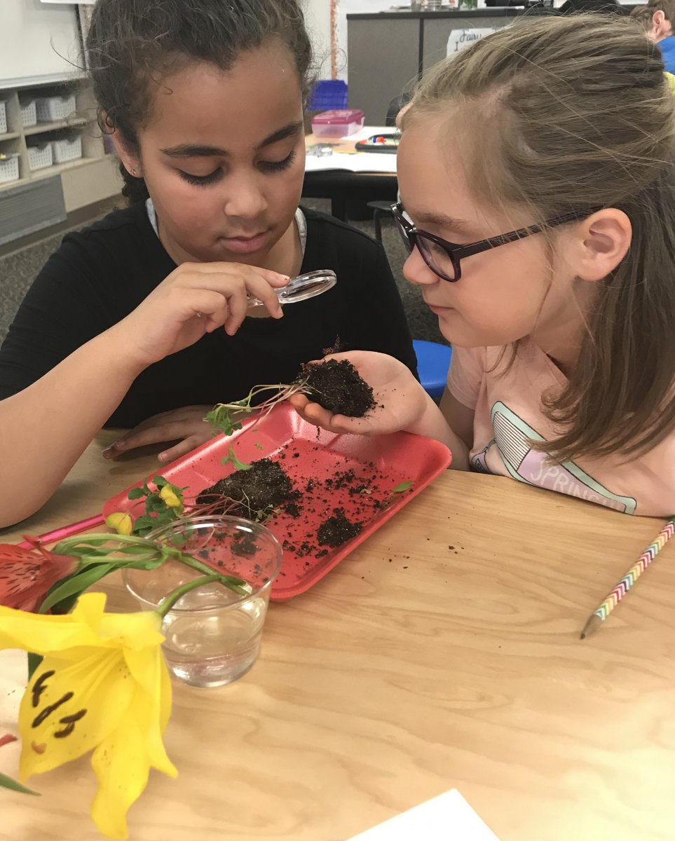Two young girls participating in a science activity involving soil.