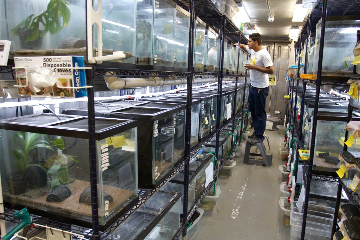 Image of a scientist caring for frogs in a safe room.