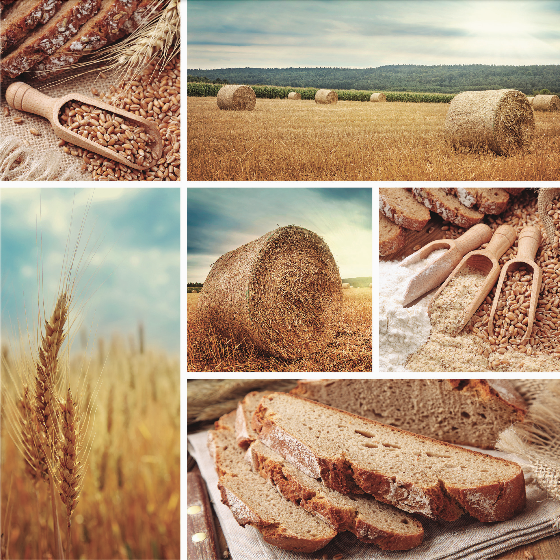 Collage of bread and wheat