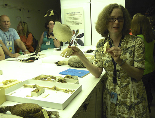teachers learn about adaptive radiation and comparative anatomy