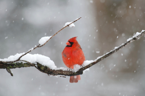 Photo of bird resting in snow