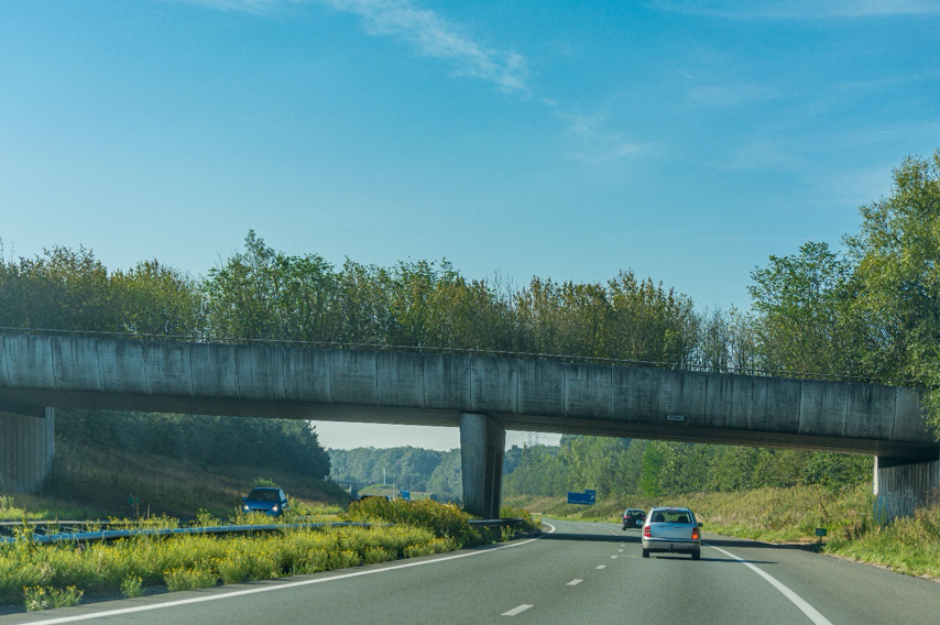 A wildlife overpass needs to mimic the animal's natural surroundings.