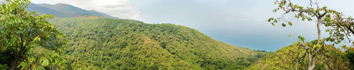 Image of the dense forest of Gombe National Park rises above Lake Tanganyika