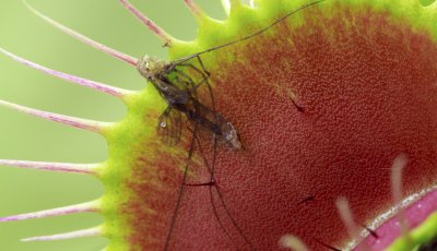 cover photo of a fly in a venus flytrap