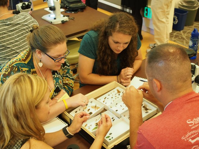 Teachers investigate specimens from the insect collection at the Smithsonian National Museum of Natural History.